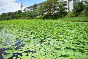 千秋公園周りの池