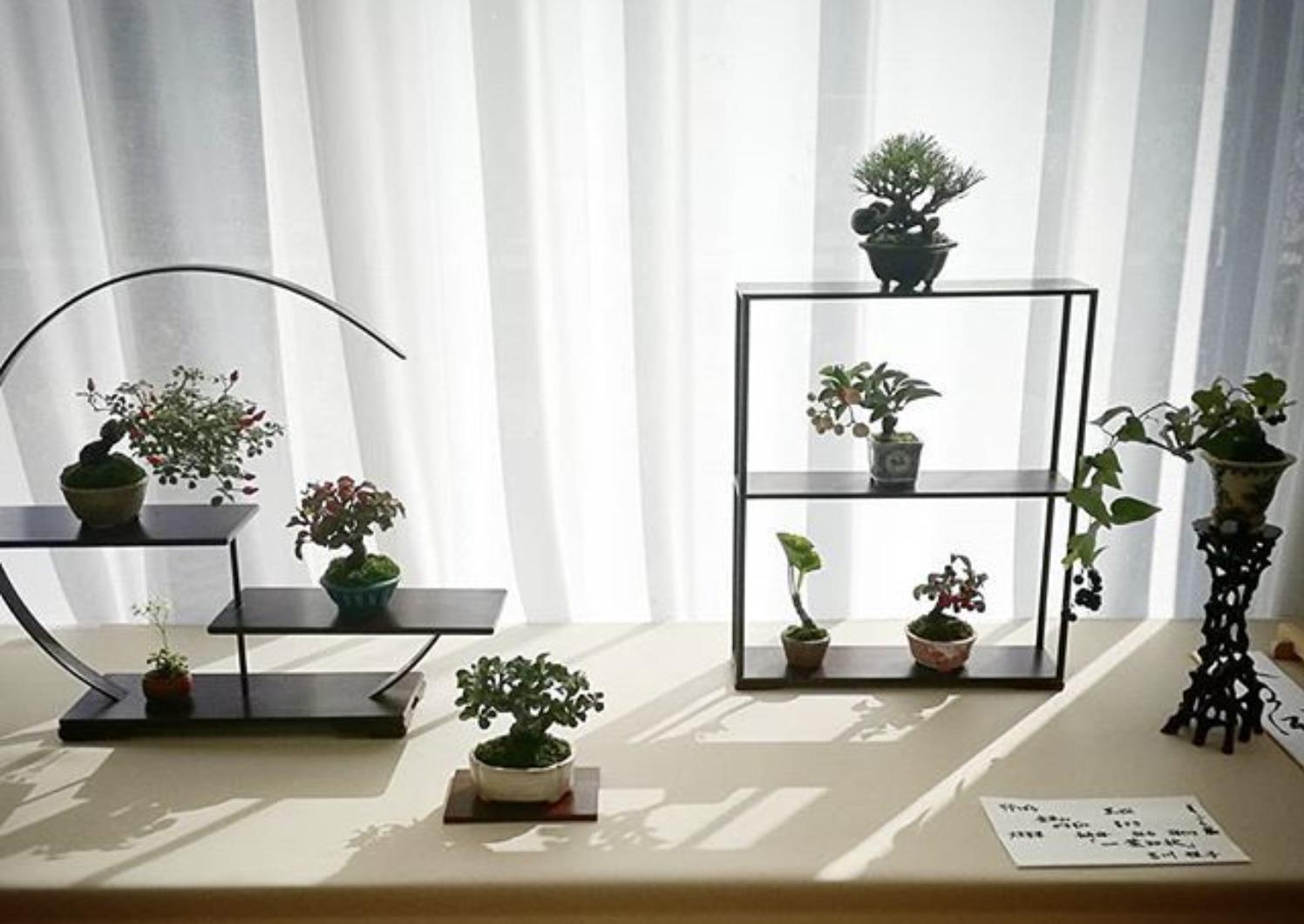 盆栽カフェ『小品盆栽 季の風』