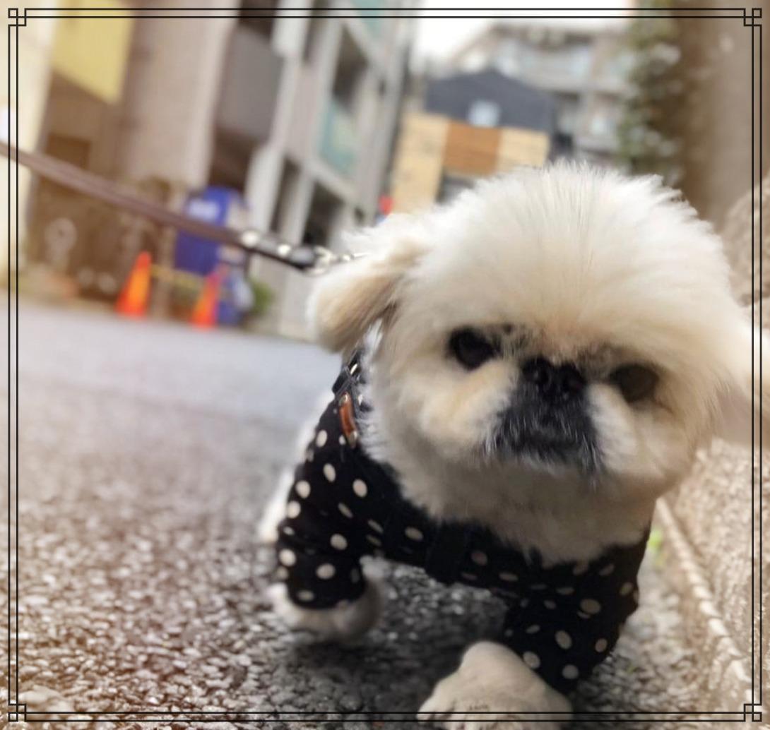 愛犬バブルの画像
