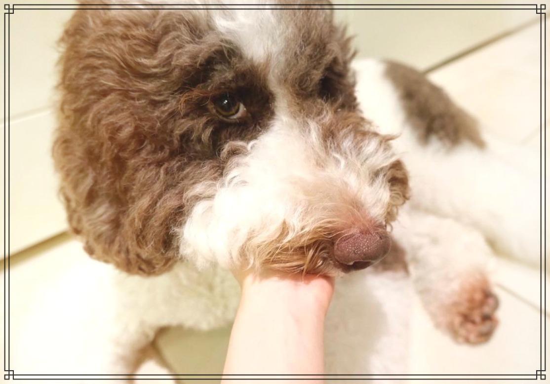 愛犬エトワールの画像