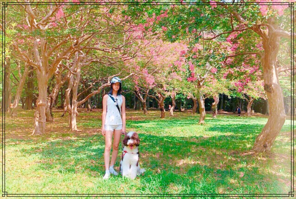 愛犬エトワールとkokiさんの画像