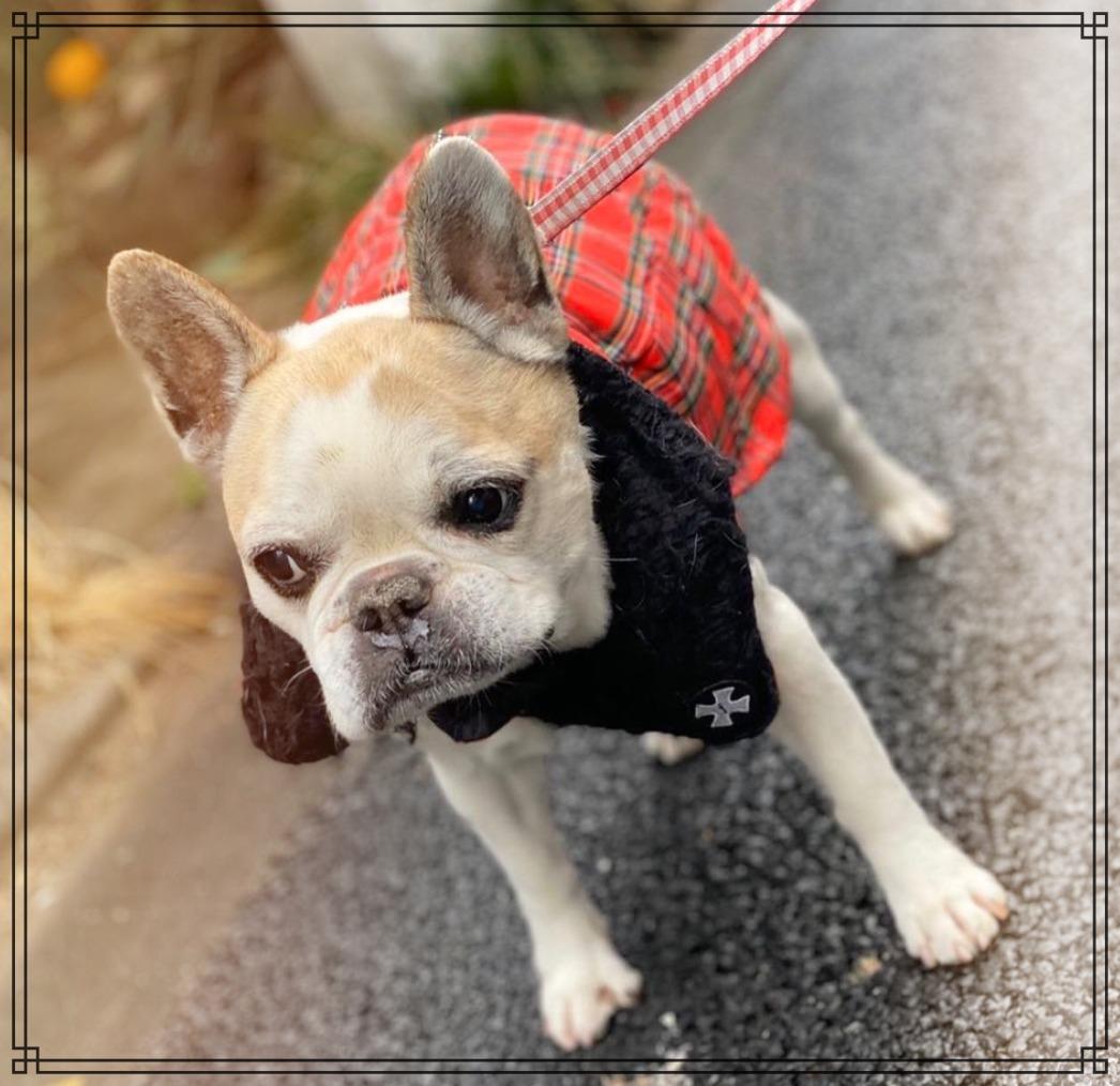 愛犬ハニーの画像